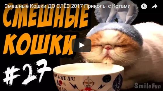 Видео приколы до слез - смотреть бесплатно, новые, свежие, 2017