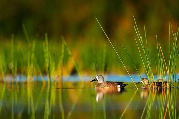 Красивые фото природы - пейзажи, картинки, удивительные, прекрасные 7