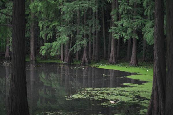 Красивые фото природы - пейзажи, картинки, удивительные, прекрасные 9