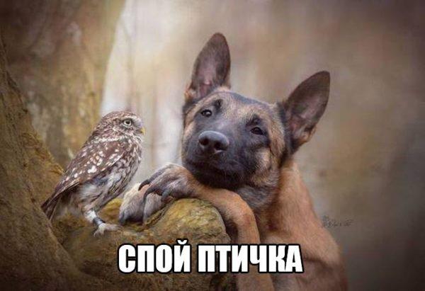 Смешные картинки про животных - забавные, ржачные, до слез 1