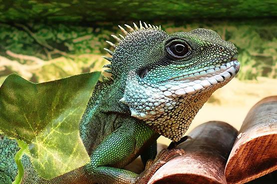 Фото и картинки удивительных животных - смотреть бесплатно 10