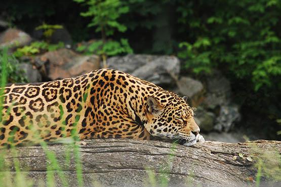 Фото и картинки удивительных животных - смотреть бесплатно 11