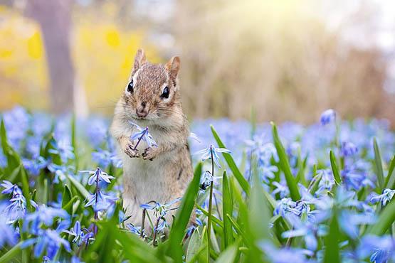 Фото и картинки удивительных животных - смотреть бесплатно 13