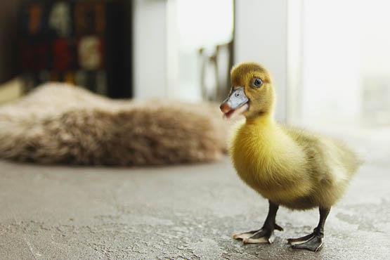 Фото и картинки удивительных животных - смотреть бесплатно 3