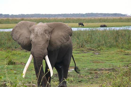 Фото и картинки удивительных животных - смотреть бесплатно 4