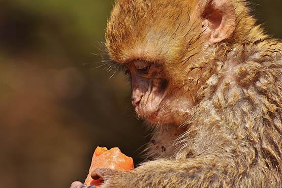 Фото и картинки удивительных животных - смотреть бесплатно 6