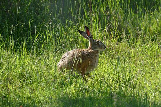 Фото и картинки удивительных животных - смотреть бесплатно 7