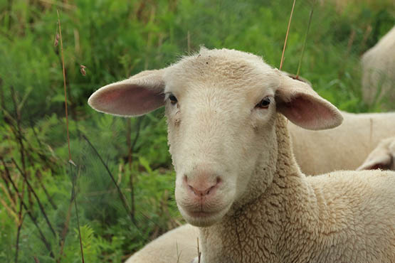 Фото и картинки удивительных животных - смотреть бесплатно 8