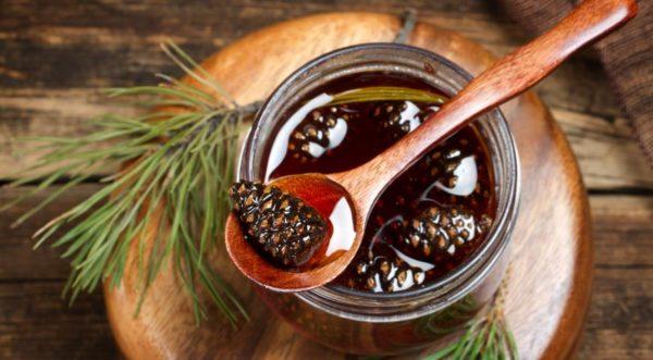 Как приготовить варенье из сосновых шишек - целебное и вкусное 1