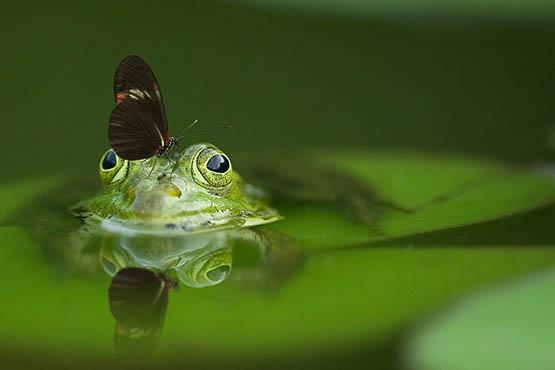 Скачать красивые картинки природы на компьютер - интересные, удивительные 5