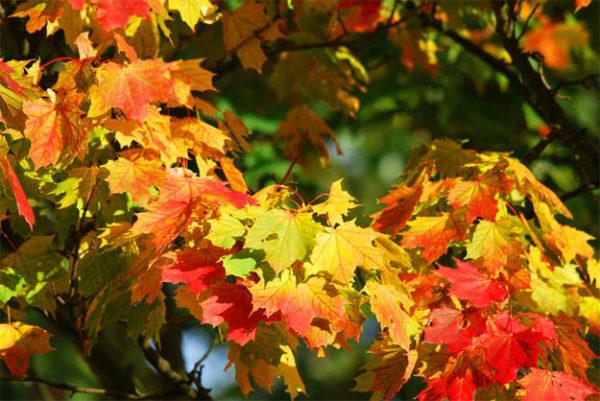 Красивые осенние картинки и фото - подборка удивительных и красочных 10