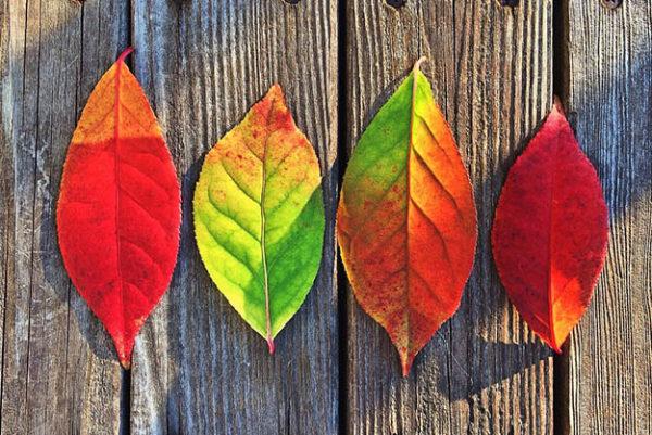 Красивые осенние картинки и фото - подборка удивительных и красочных 2