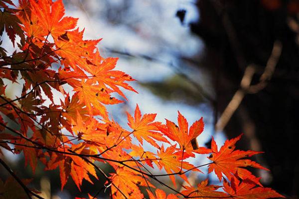 Красивые осенние картинки и фото - подборка удивительных и красочных 4