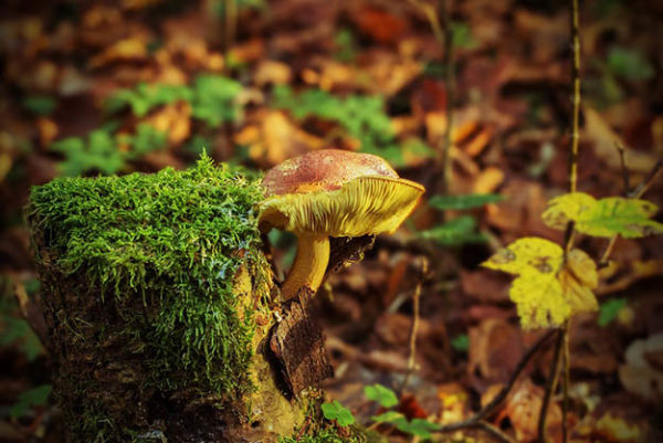 Красивые осенние картинки и фото - подборка удивительных и красочных 6