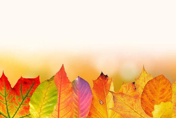 Красивые осенние картинки и фото - подборка удивительных и красочных 7