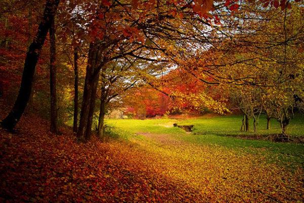 Красивые осенние картинки и фото - подборка удивительных и красочных 8