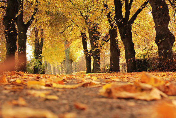 Красивые осенние картинки и фото - подборка удивительных и красочных 9