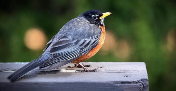 Красивые фото и картинки птиц - самые удивительные и красочные 1
