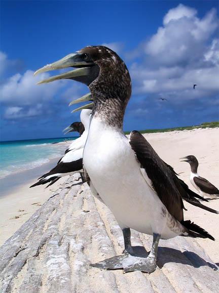 Красивые фото и картинки птиц - самые удивительные и красочные 10