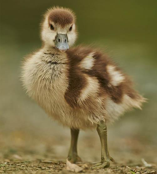 Красивые фото и картинки птиц - самые удивительные и красочные 11