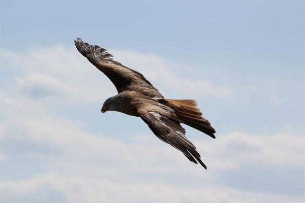 Красивые фото и картинки птиц - самые удивительные и красочные 2