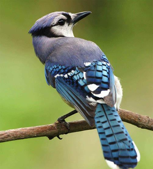 Красивые фото и картинки птиц - самые удивительные и красочные 3