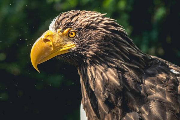 Красивые фото и картинки птиц - самые удивительные и красочные 4