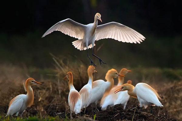 Красивые фото и картинки птиц - самые удивительные и красочные 6