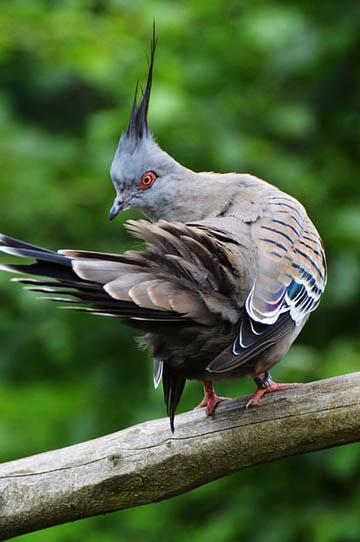 Красивые фото и картинки птиц - самые удивительные и красочные 7