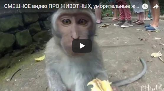 Прикольные и смешные видео приколы про животных - новые, свежие