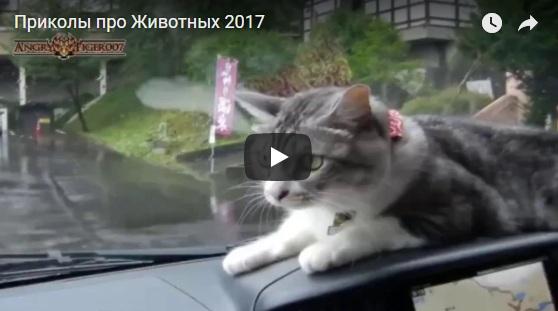 Смотреть прикольные видео про животных - смешные и ржачные