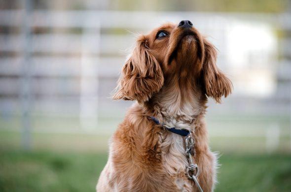 Интересные и красивые картинки собак - самые удивительные фото 9