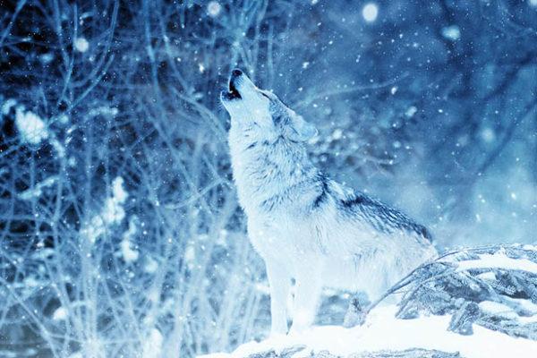 Красивые и прикольные зимние картинки - красочные и удивительные 13
