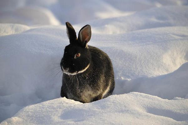Красивые и прикольные зимние картинки - красочные и удивительные 2