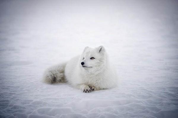 Красивые и прикольные зимние картинки - красочные и удивительные 8
