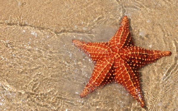 Красивые и удивительные картинки морской звезды - лучшая подборка 11