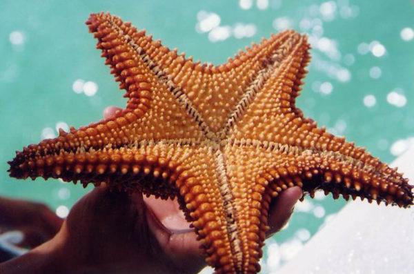 Красивые и удивительные картинки морской звезды - лучшая подборка 2