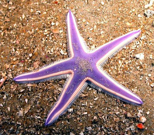 Красивые и удивительные картинки морской звезды - лучшая подборка 4