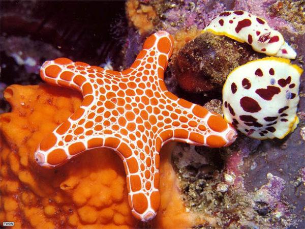 Красивые и удивительные картинки морской звезды - лучшая подборка 5