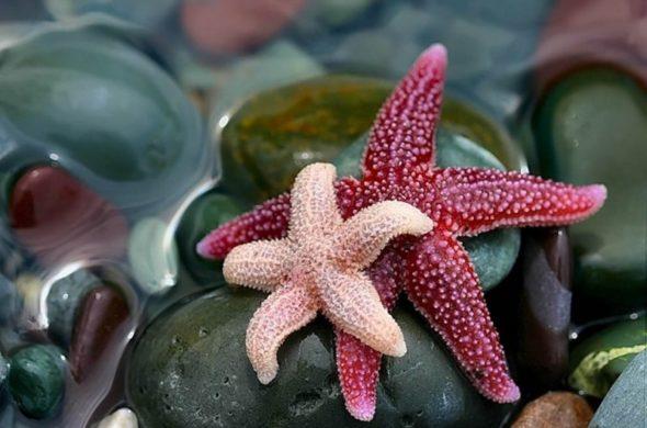Красивые и удивительные картинки морской звезды - лучшая подборка 6