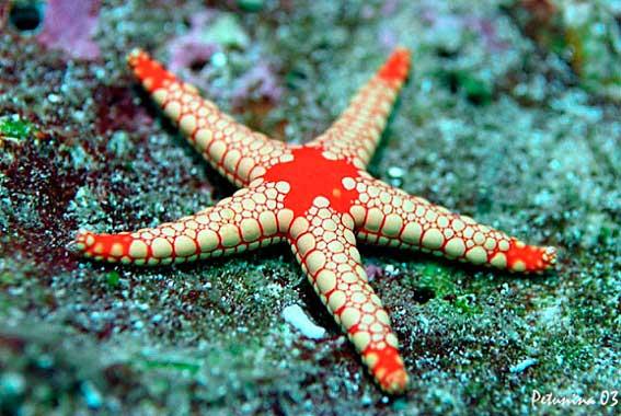 Красивые и удивительные картинки морской звезды - лучшая подборка 7