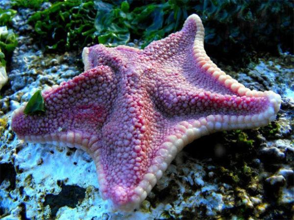 Красивые и удивительные картинки морской звезды - лучшая подборка 8