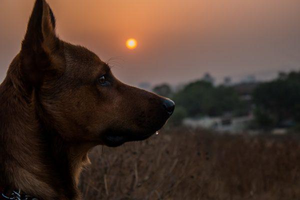 Красивые картинки собак и собачек - смотреть бесплатно, очень крутые 10