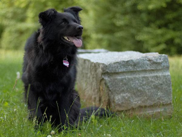 Красивые картинки собак и собачек - смотреть бесплатно, очень крутые 12