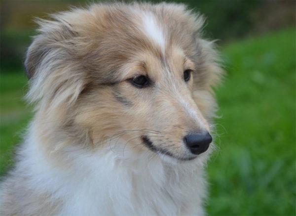Красивые картинки собак и собачек - смотреть бесплатно, очень крутые 2