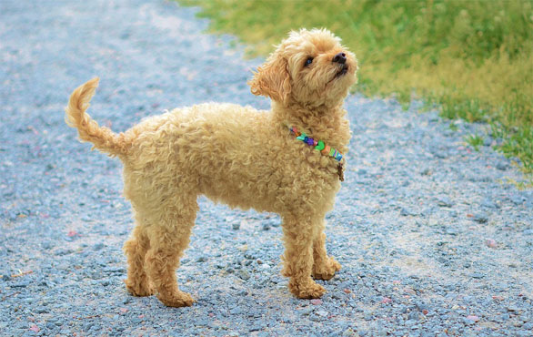 Красивые картинки собак и собачек - смотреть бесплатно, очень крутые 3