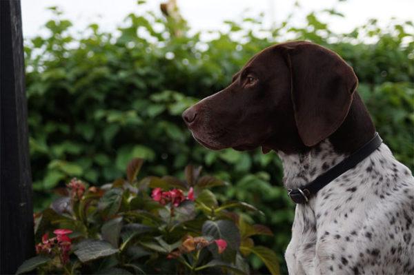 Красивые картинки собак и собачек - смотреть бесплатно, очень крутые 4