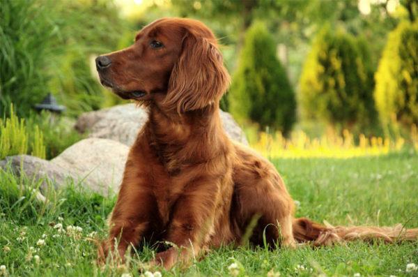 Красивые картинки собак и собачек - смотреть бесплатно, очень крутые 6