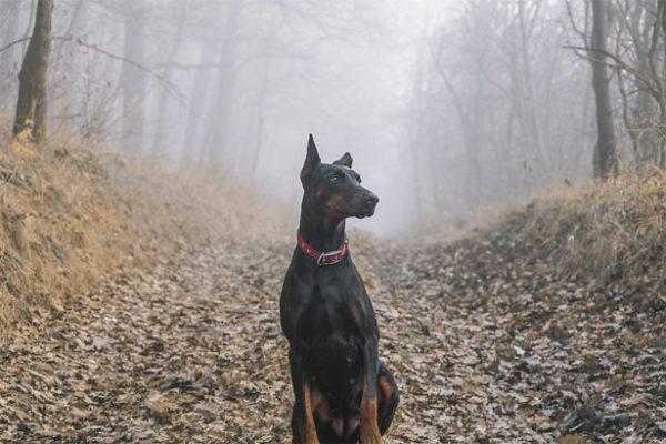 Красивые картинки собак и собачек - смотреть бесплатно, очень крутые 7