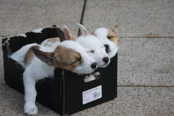 Красивые картинки собак и собачек - смотреть бесплатно, очень крутые 8